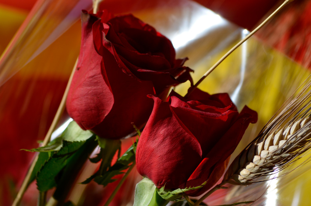Red roses in Sant Jordi day (Catalonia)